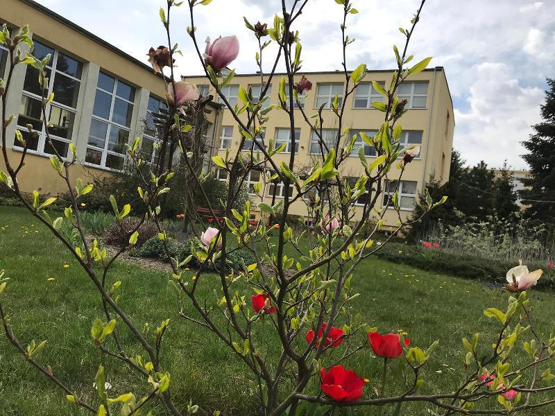 Tak pięknie jest w maju